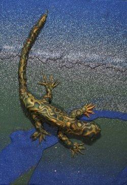 Pr30:28, lizard polymer clay relief sculpture, Sara Joseph
